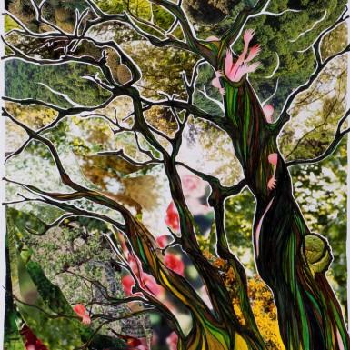 Les arbres verts 3